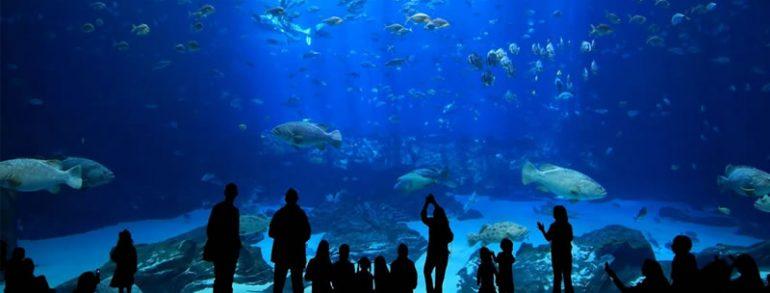 İstanbul SEA LIFE Aquarium